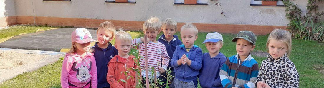 Škola hrou - strom zahrada MŠ (2)